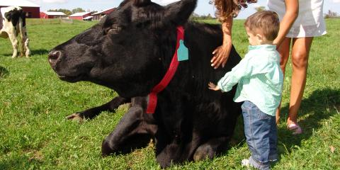 Petting a cow at Farm Sanctuary