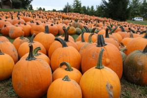 Pumpkins in the fall in the Finger Lakes
