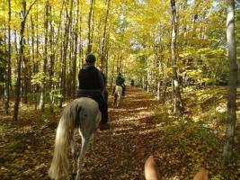 Ride astride a horse through the Finger Lakes National Forest
